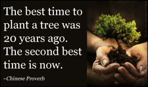 EmilysQuotes.Com-time-plant-tree-present-nature-being-a-good-person-inspirational-Chinese-Proverb
